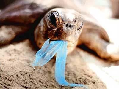 inquinamento buste plastica