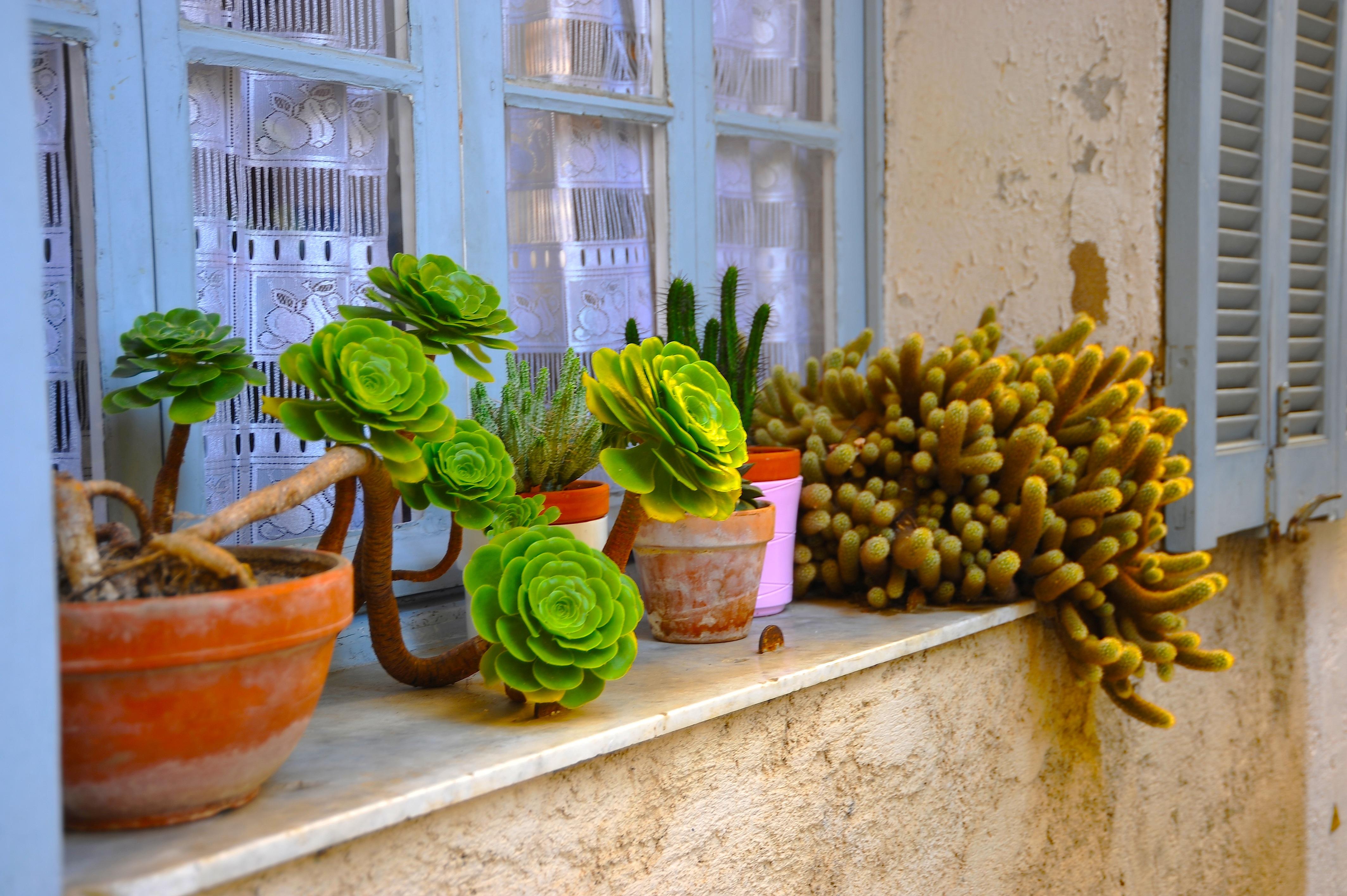 Lenticchie  il rimedio naturale per piante morenti – EcoSpiragli di ... dbf53b4269d5