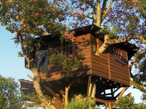 Hotel sugli alberi per aprile dolce dormire for Piccoli progetti di palafitte