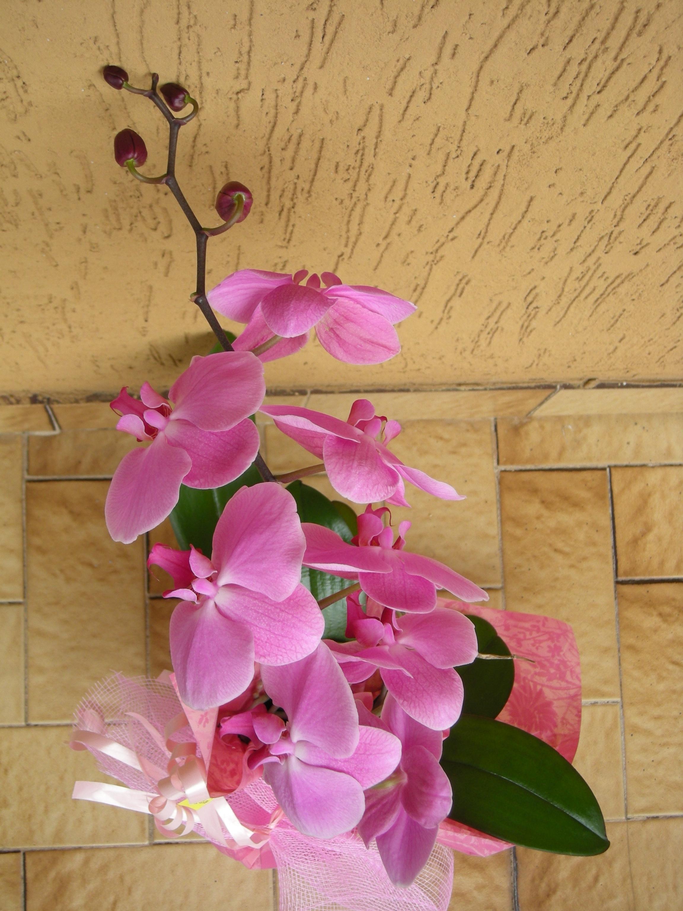 Idee regalo un orchidea per un ambientalista scatta l for Orchidea acqua
