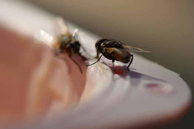 cattura mosche