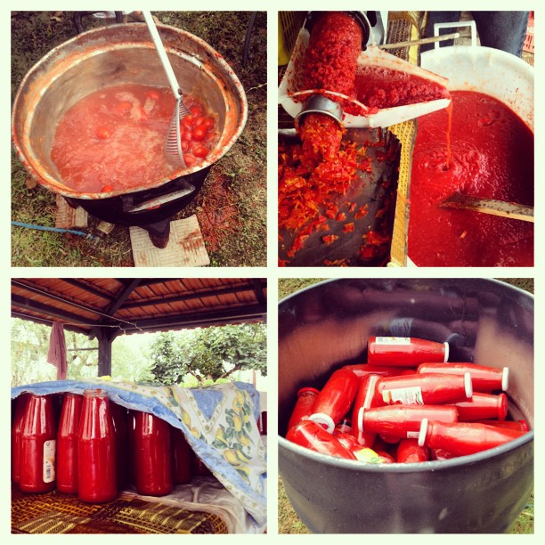 conserva di pomodori