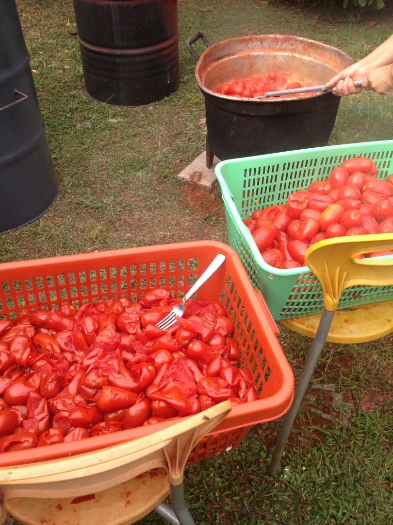 bollire i pomodori