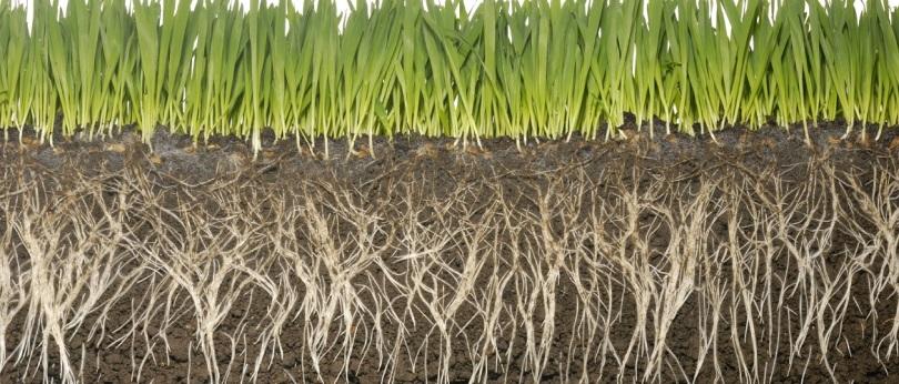 concimi naturali biologici organici micorrize