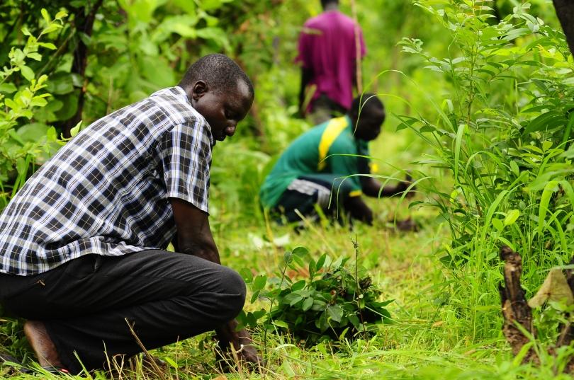 farmers_planting_senegal_africa