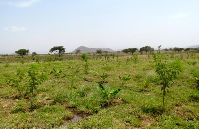 land_reforestation_senegal_africa