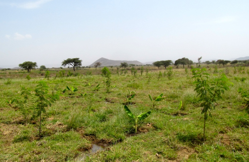 land_reforestation_senegal_africa
