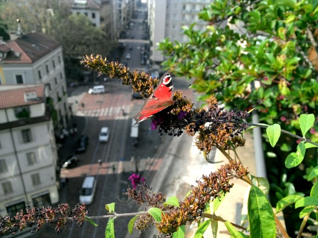GC 2016_Effetto farfalla