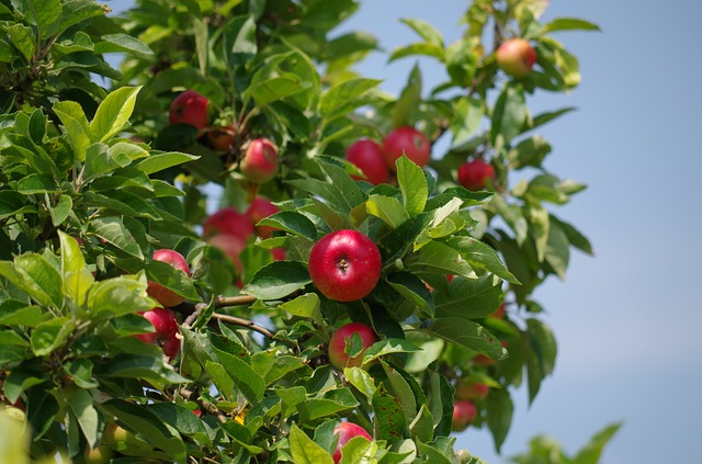 apple-tree- pelle arrossata- rimedio nonna-