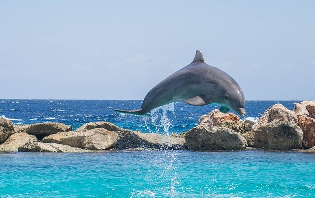 dolphin-delfino