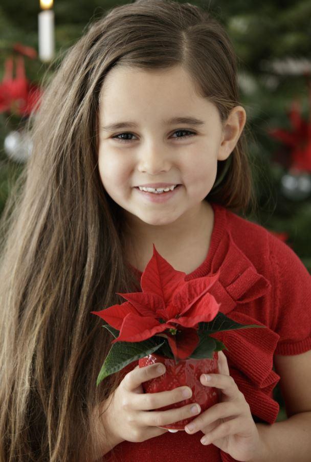 Stella Di Natale Ogni Quanto Si Annaffia.Stella Di Natale Cura E Mantenimento Ecospiragli Di Anna