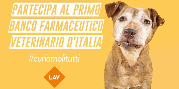 Farmaci per animali, ai nastri di partenza la campagna della Lav#CURIAMOLITUTTI