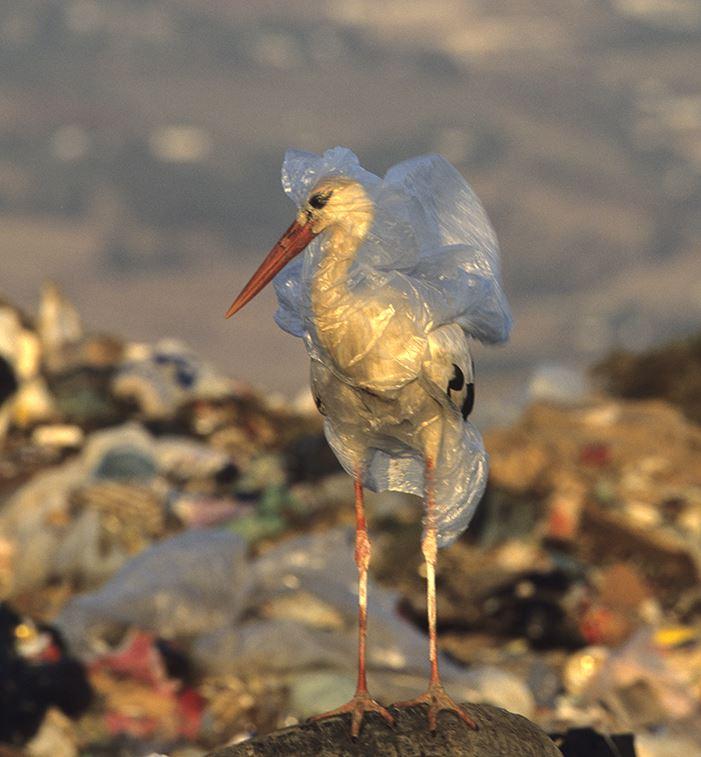 Planet or plastic: la plastica può essere unarisorsa?
